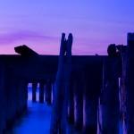 blue dog slider 02