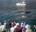 Whales_DSC_2774_Whales_1_200