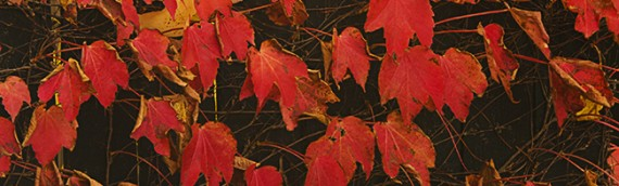 4 photography tips to capture the colours of autumn