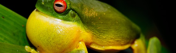 Tips for photographing frogs