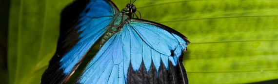 Butterflies – the best plants to plant and the best tips for photographing butterflies