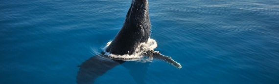 Whale photography tips