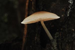 Fungi_queensland_2848_1400