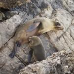 Seals_Marie_1400