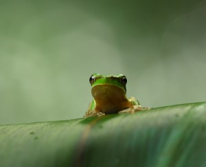 Frog_287_cropped_2000