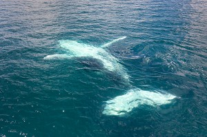 Whales_DSC_2794_edited_1200