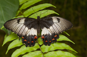 Butterflies throughout Australia come in a wide range of colours